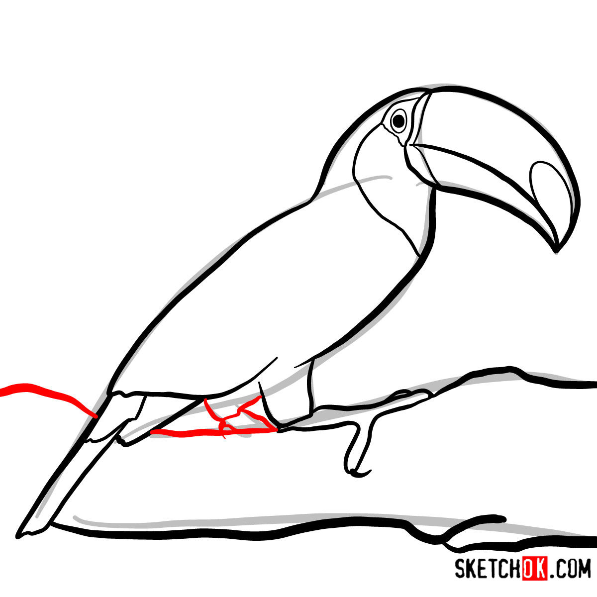 How to draw a Toucan | Birds - step 07