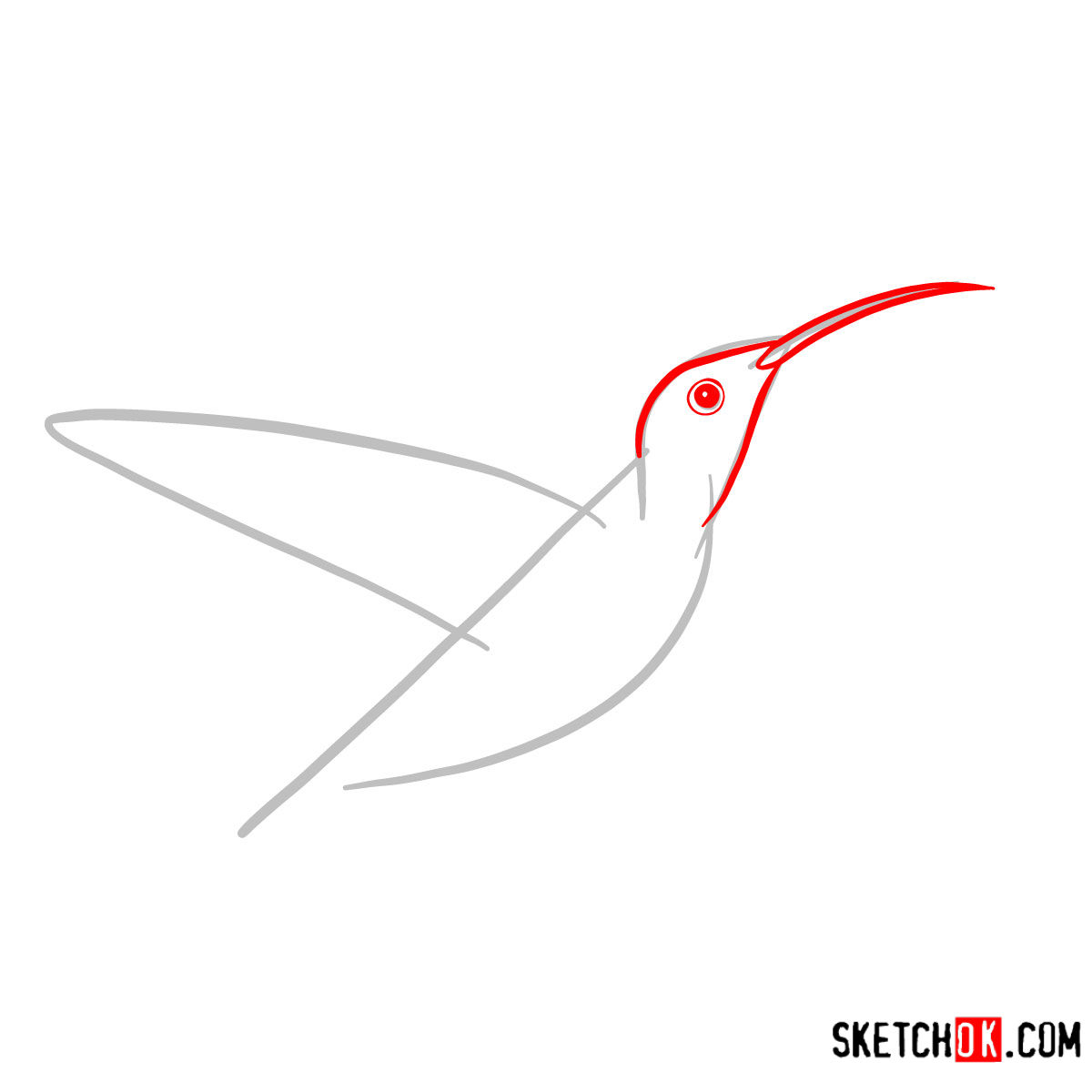 How to draw a Colibri bird | Birds - step 02