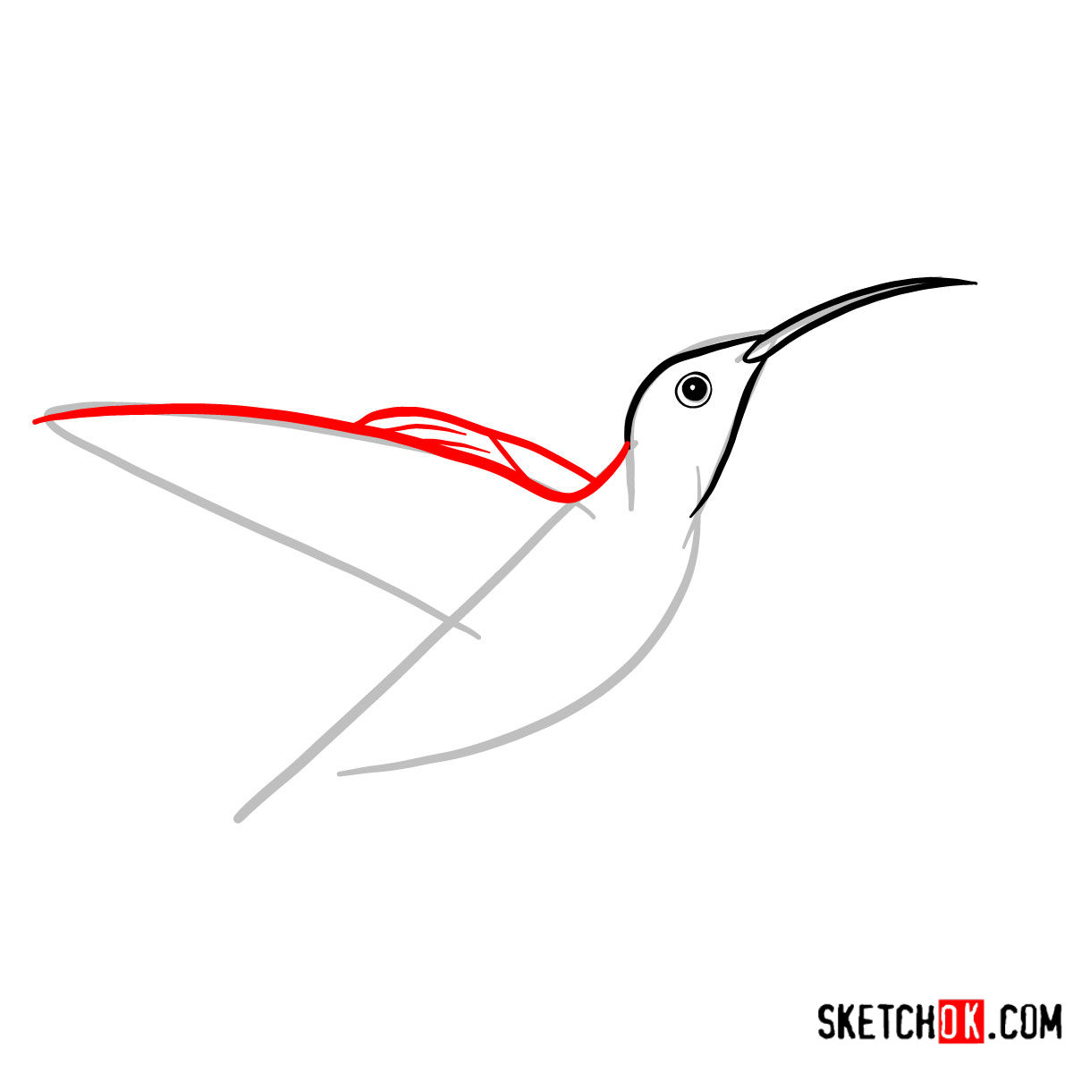 How to draw a Colibri bird | Birds - step 03