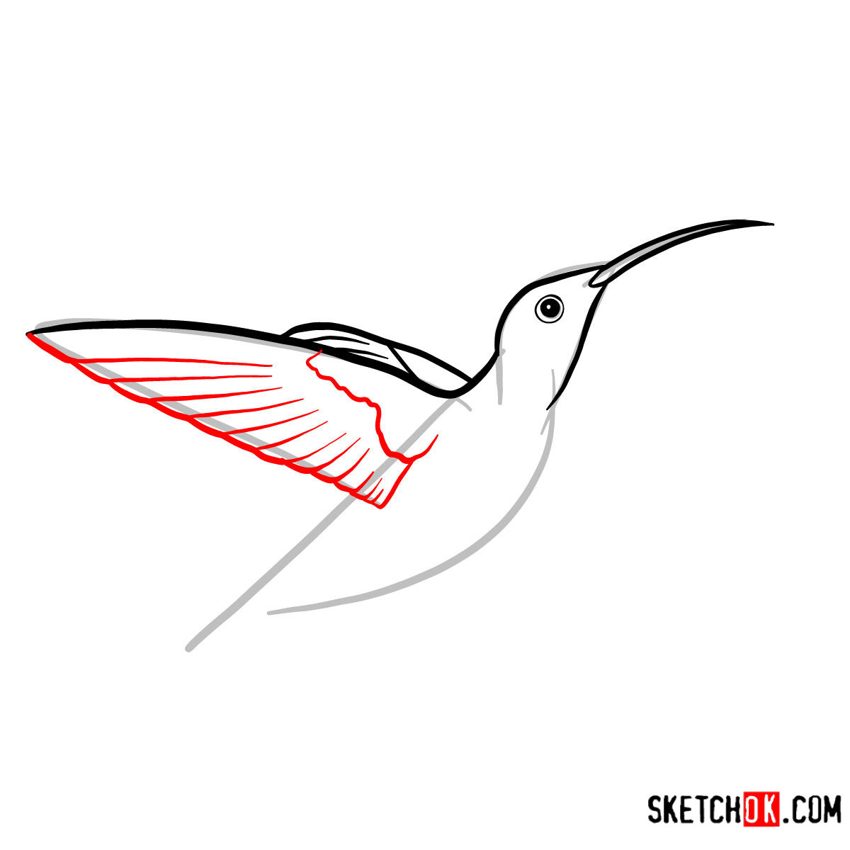 How to draw a Colibri bird | Birds - step 04