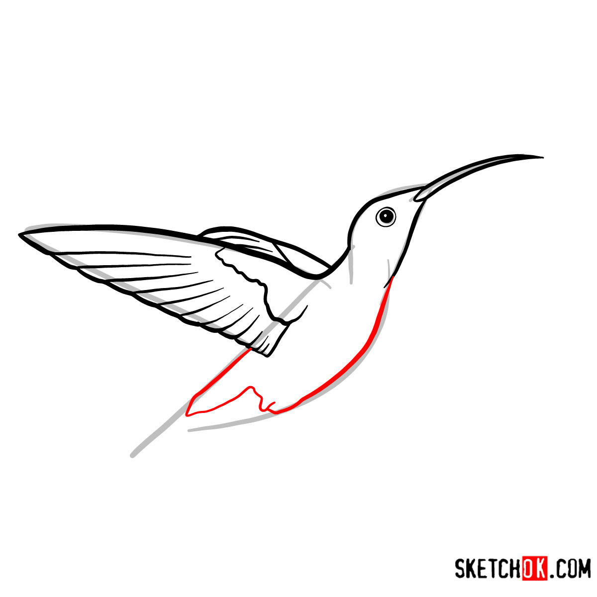 How to draw a Colibri bird | Birds - step 05
