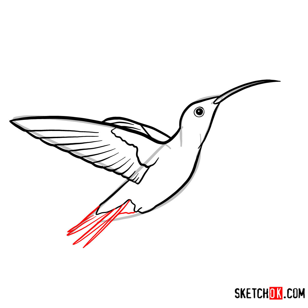 How to draw a Colibri bird | Birds - step 06