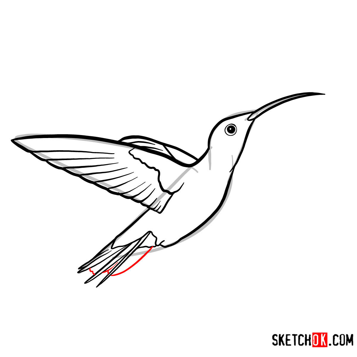 How to draw a Colibri bird | Birds - step 07