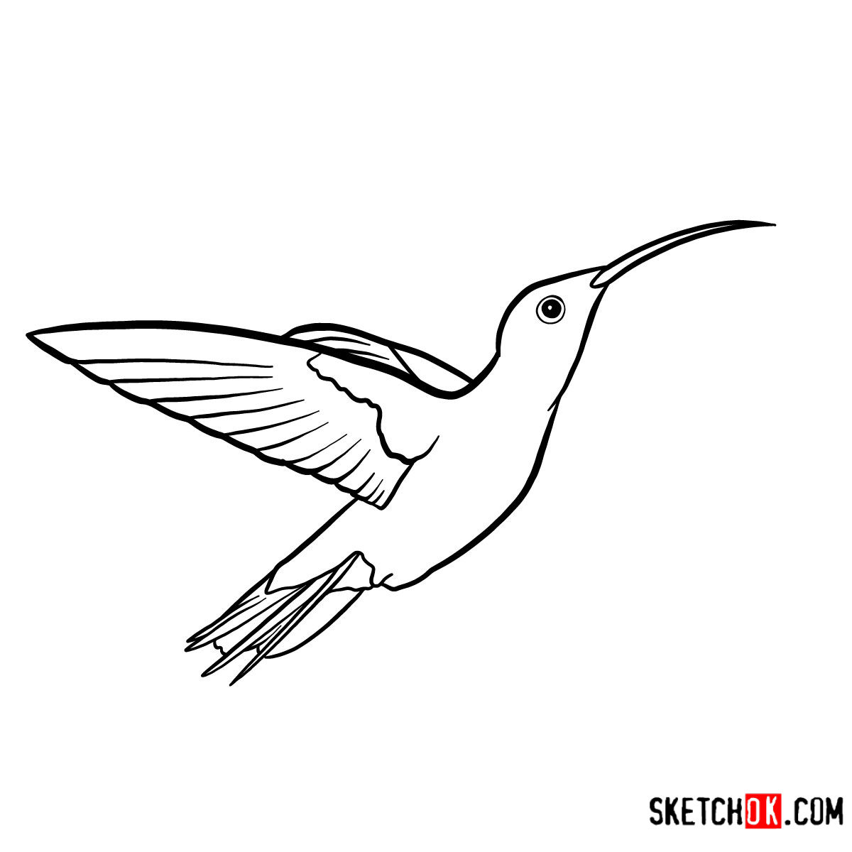 How to draw a Colibri bird