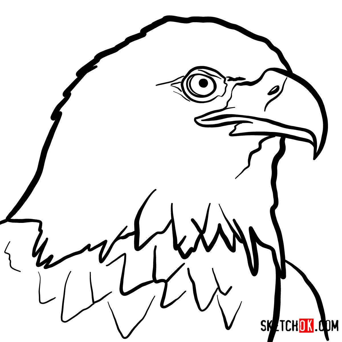How to draw bald eagles head birds coloring
