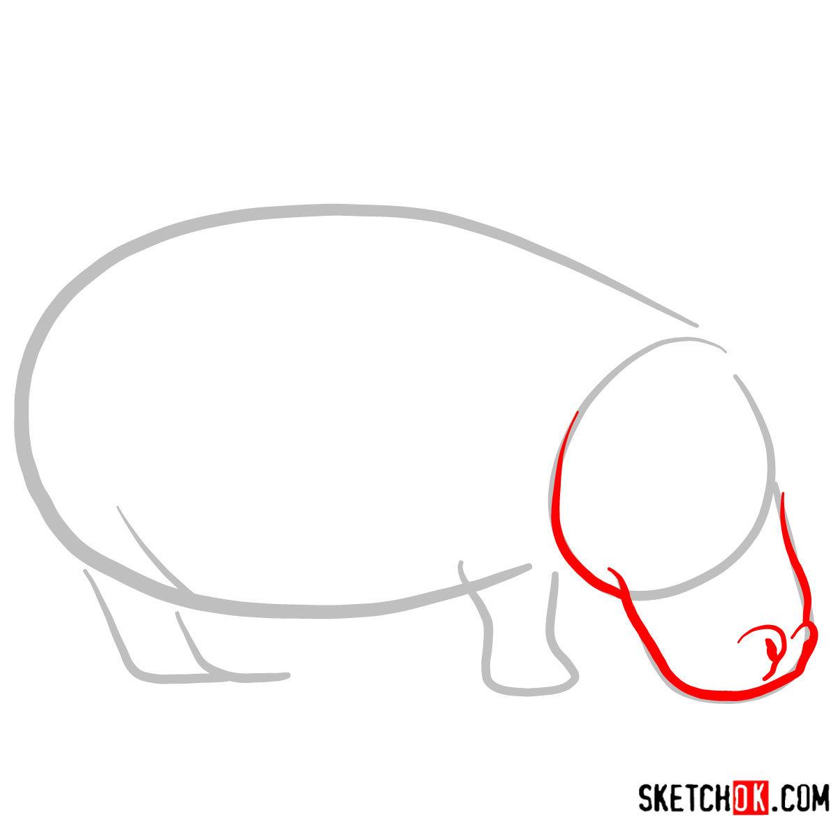 How to draw a Hippopotamus | Wild Animals - step 02