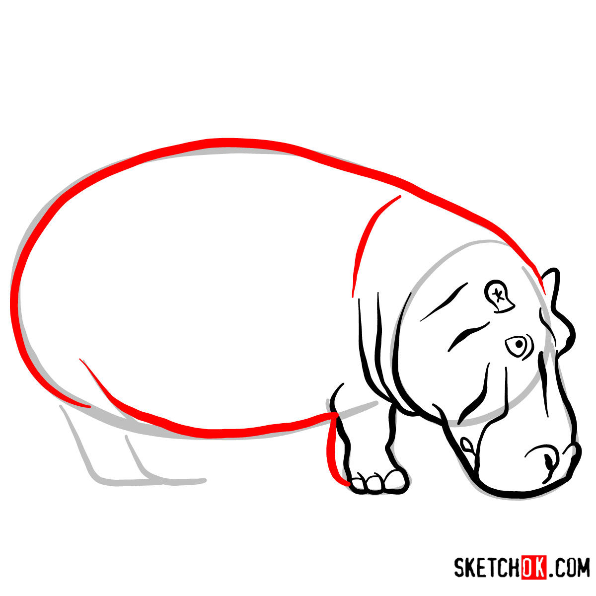 How to draw a Hippopotamus | Wild Animals - step 05