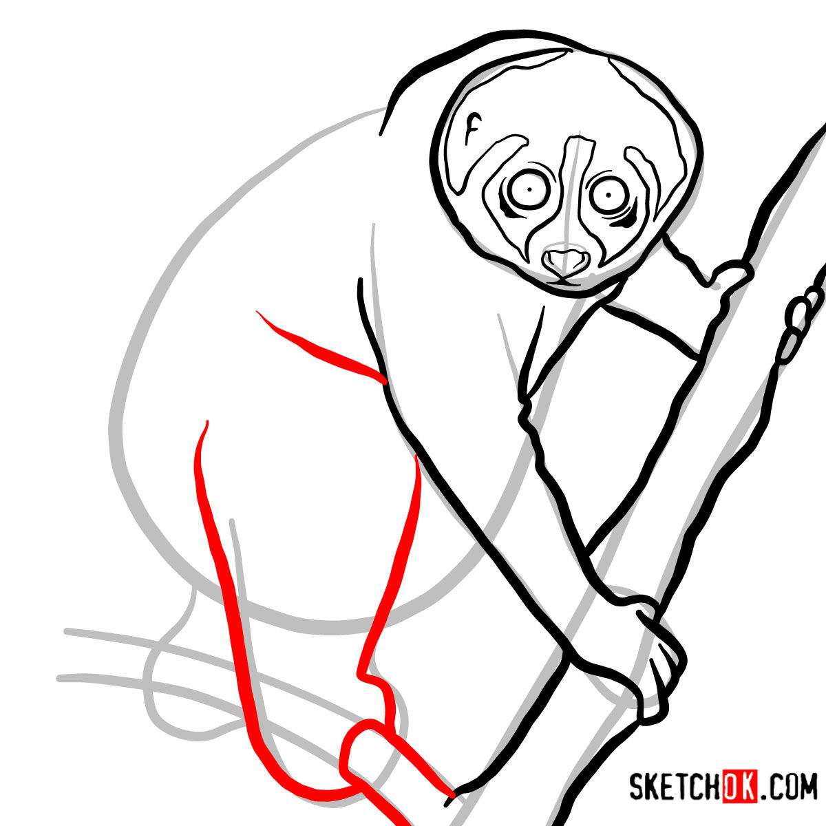 How to draw a Slow loris | Wild Animals - step 07