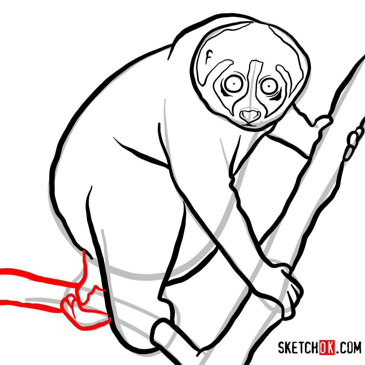 How to draw a Slow loris | Wild Animals - step 09