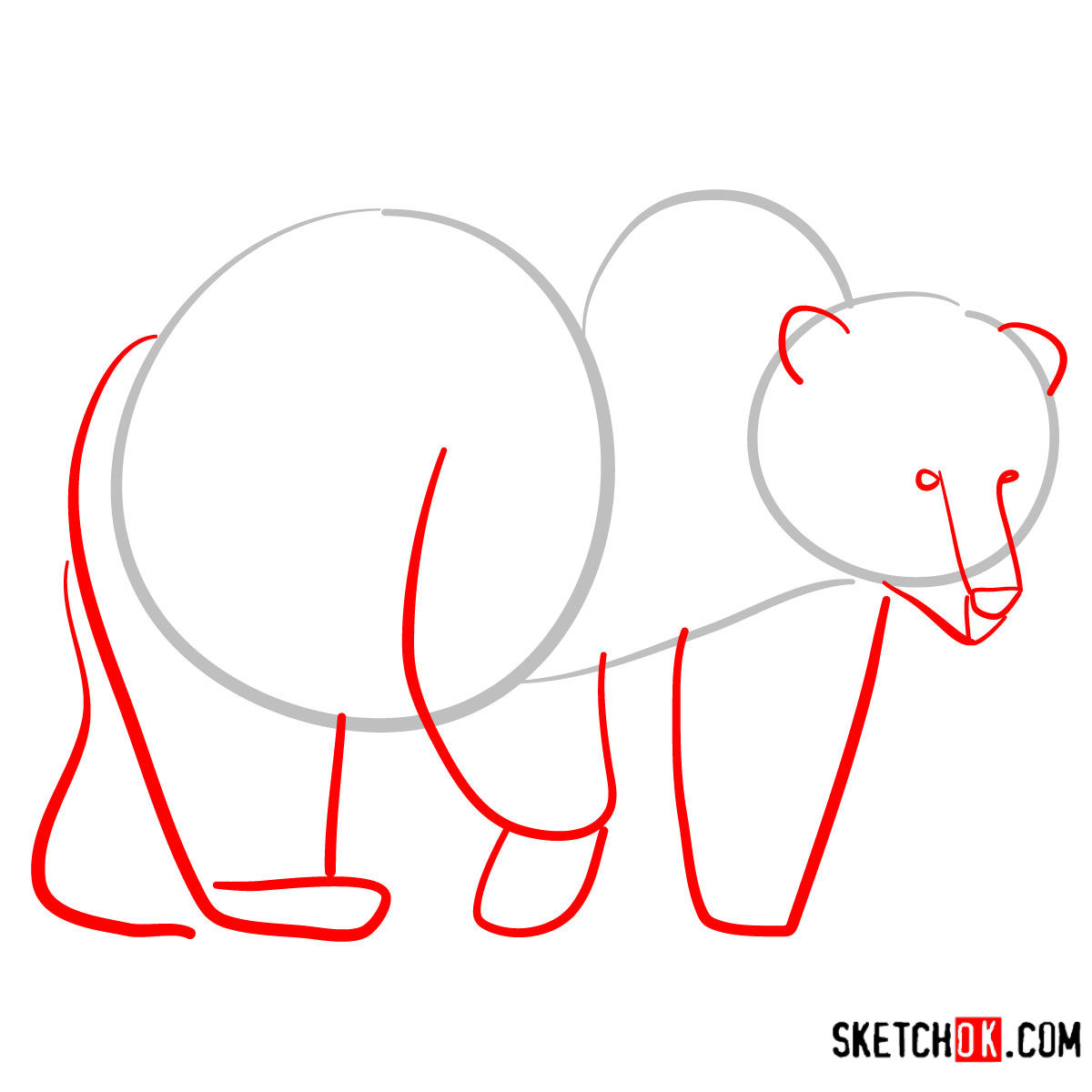 How to draw a brown bear | Wild Animals - step 02