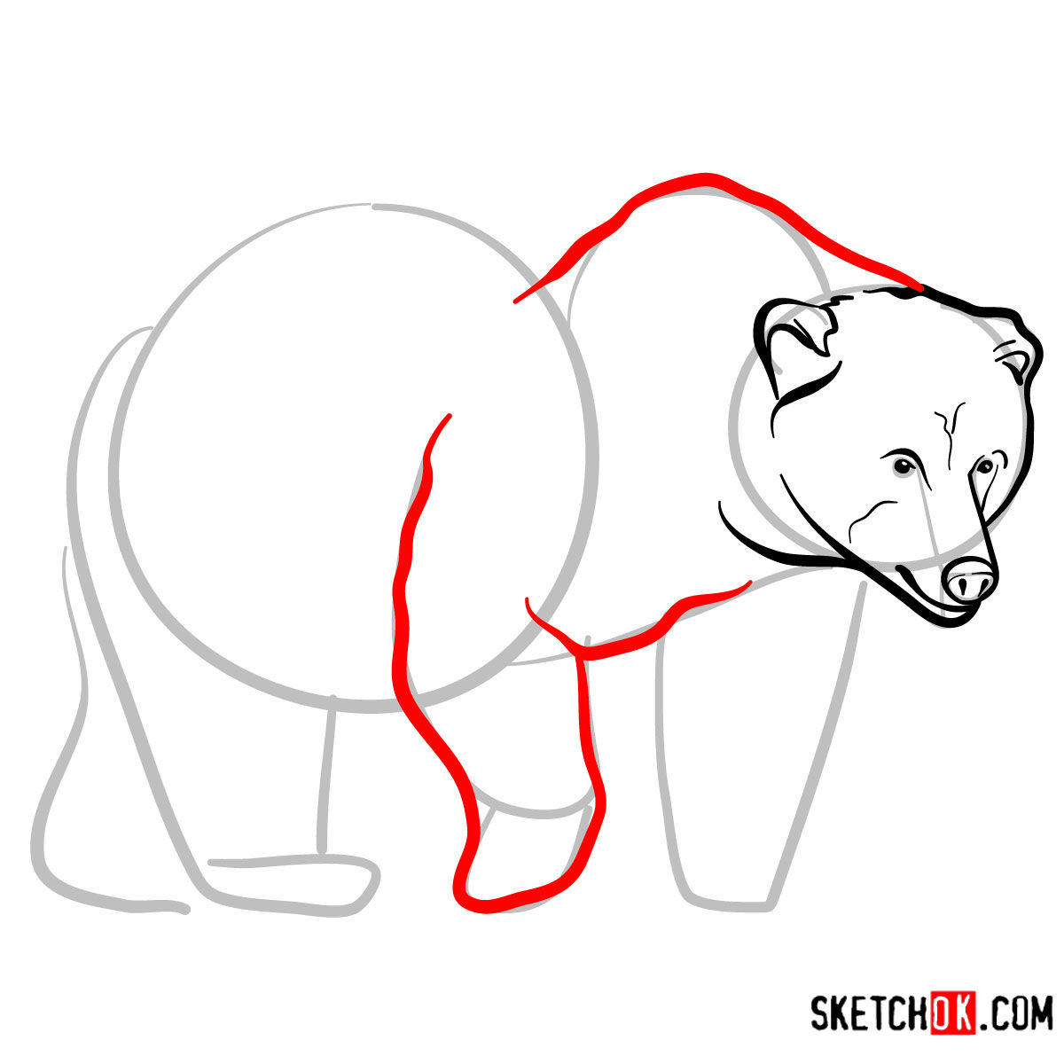 How to draw a brown bear | Wild Animals - step 06