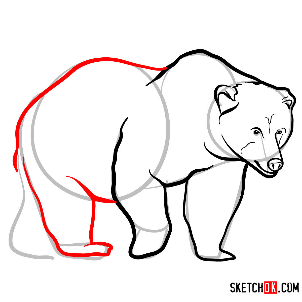 How to draw a brown bear | Wild Animals - step 08