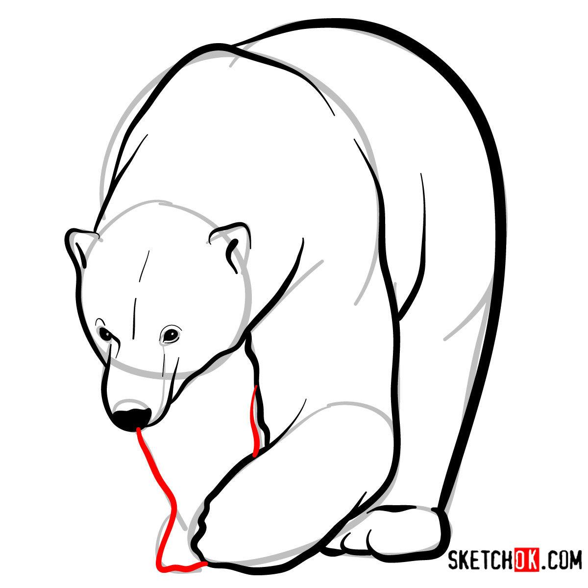 How to draw a polar bear | Wild Animals - step 08