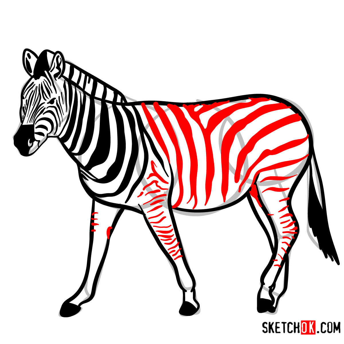 How to draw a Zebra | Wild Animals - step 12