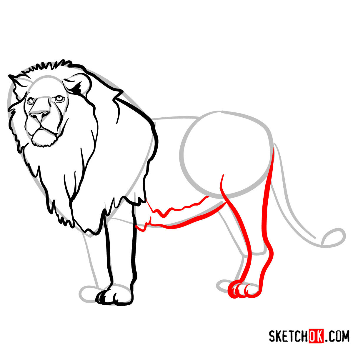 How to draw a Lion standing | Wild Animals - step 09