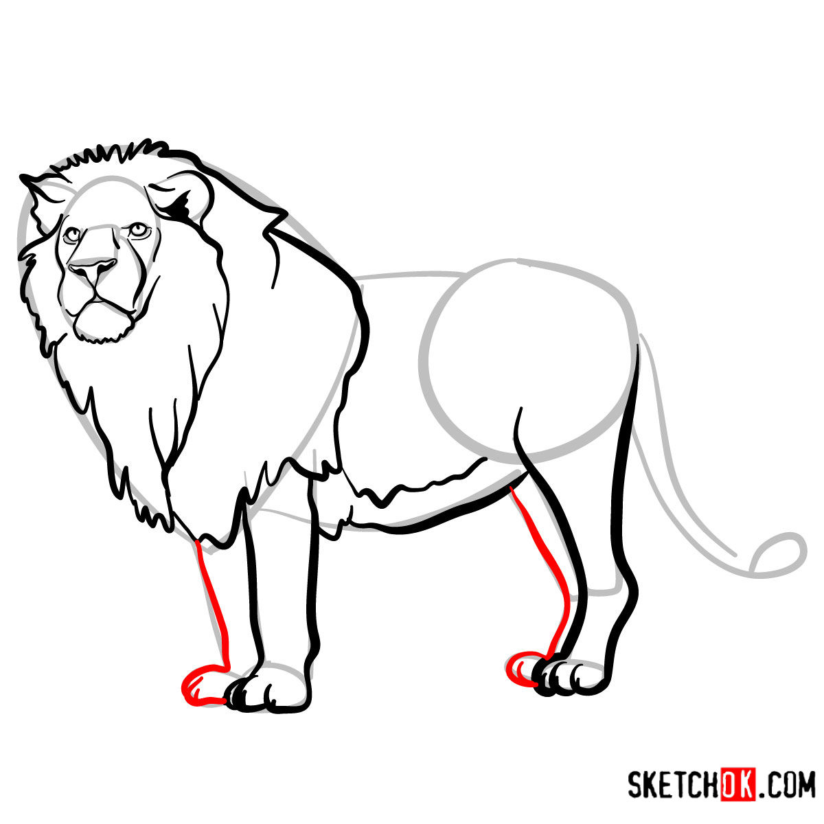How to draw a Lion standing | Wild Animals - step 10
