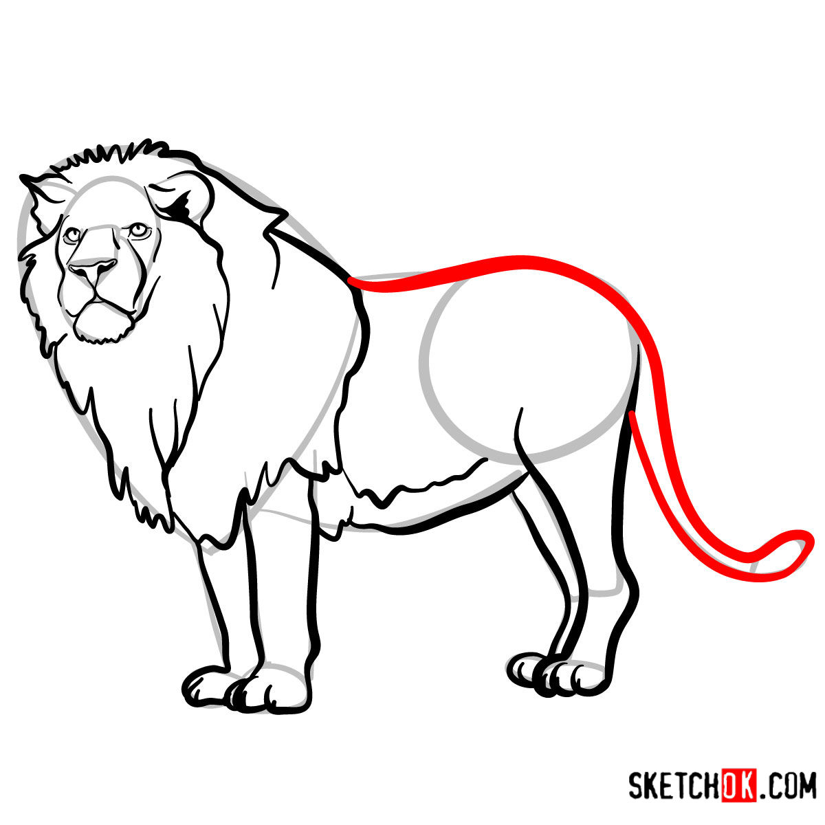 How to draw a Lion standing | Wild Animals - step 11