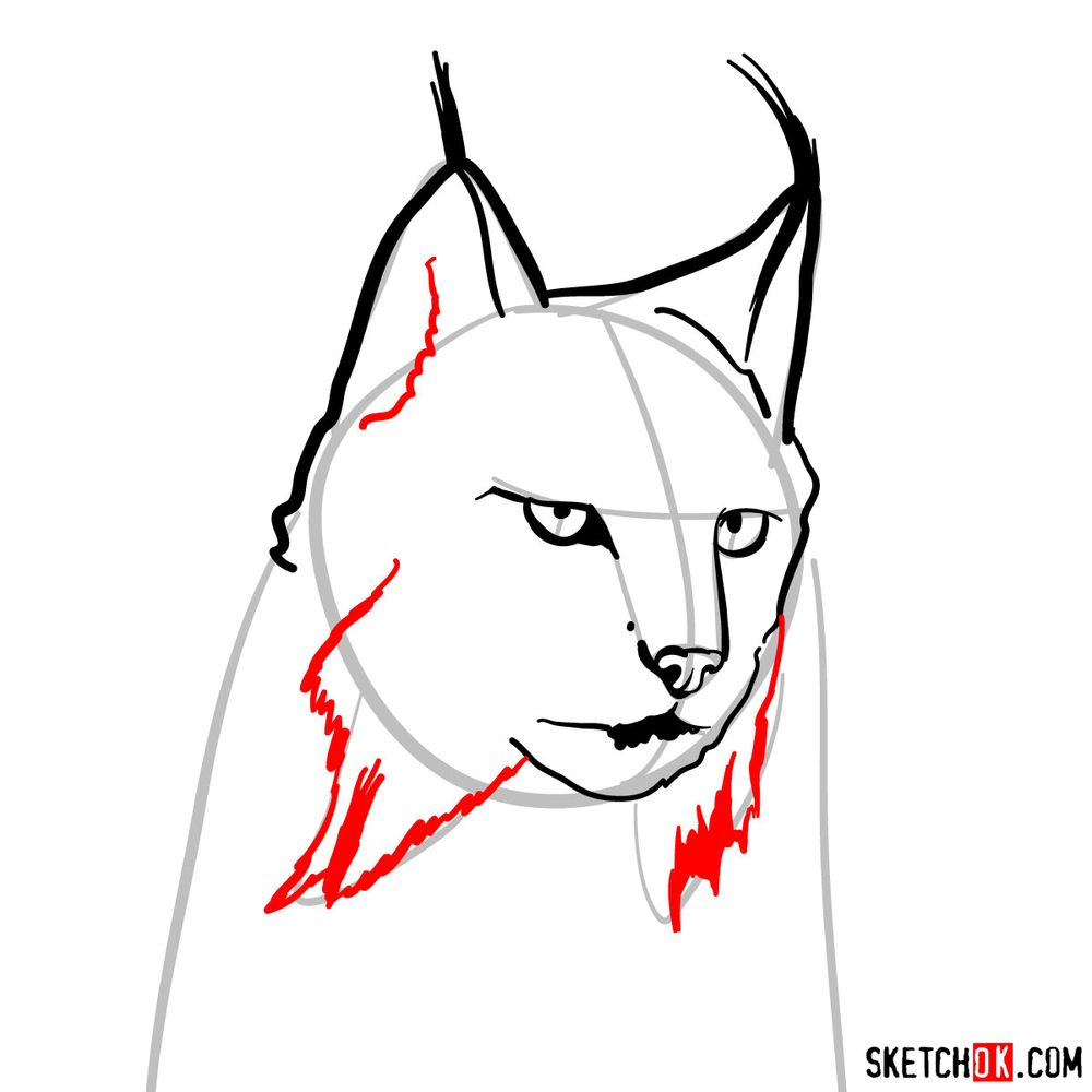 How to draw a lynx head - step 06