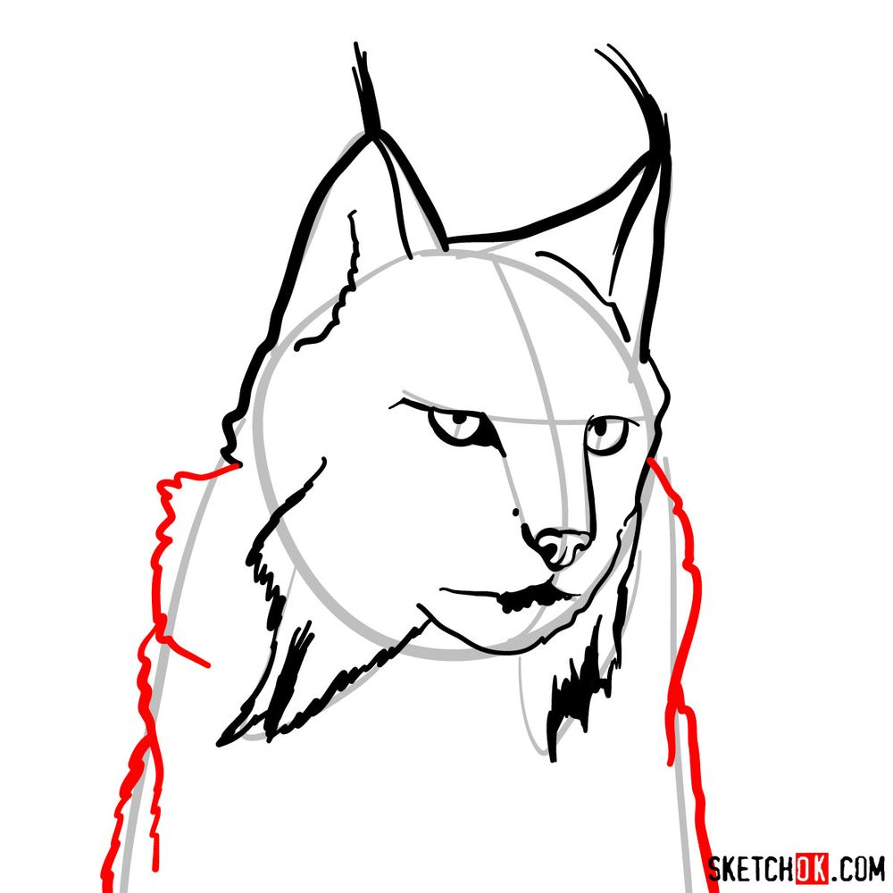 How to draw a lynx head - step 07