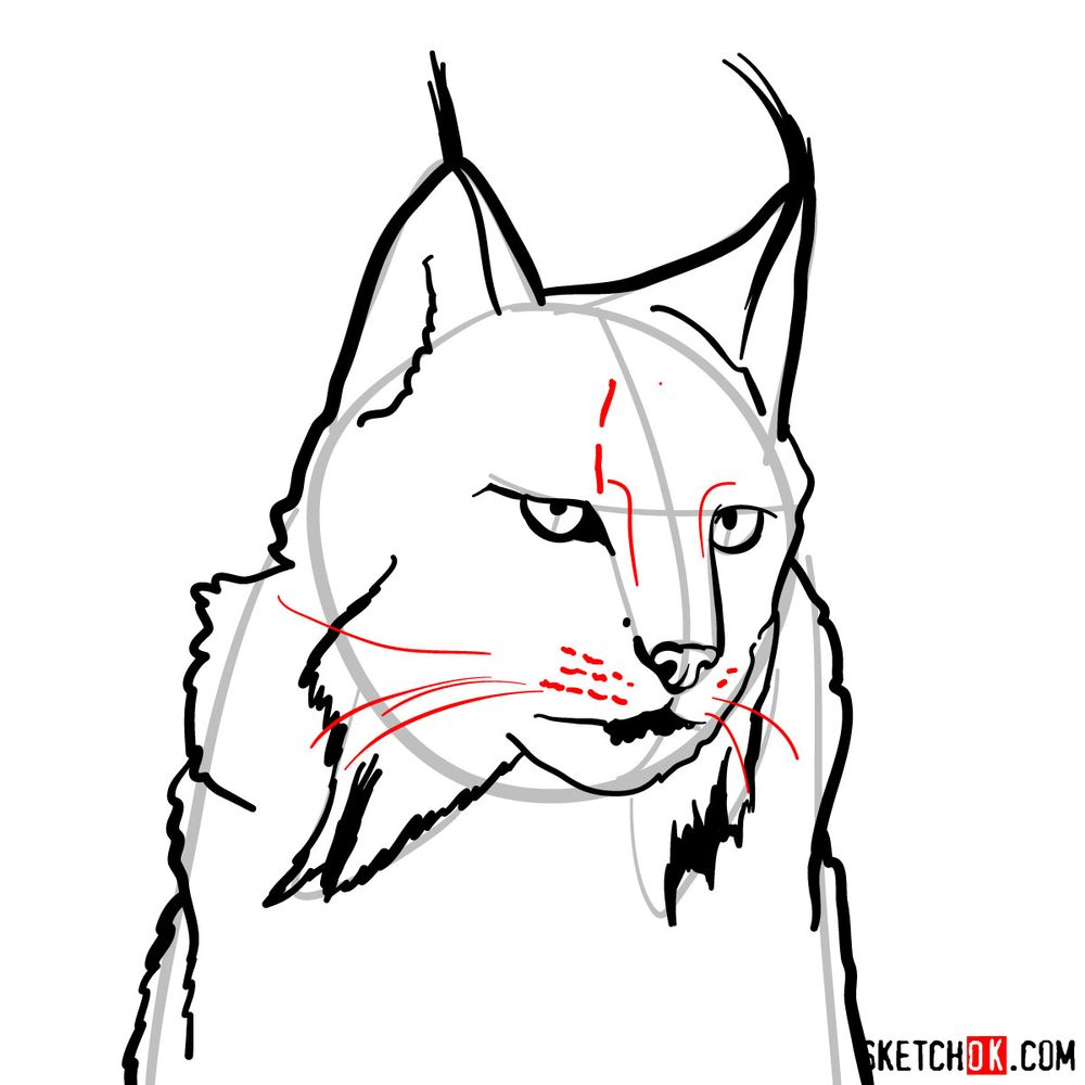 How to draw a lynx head - step 08