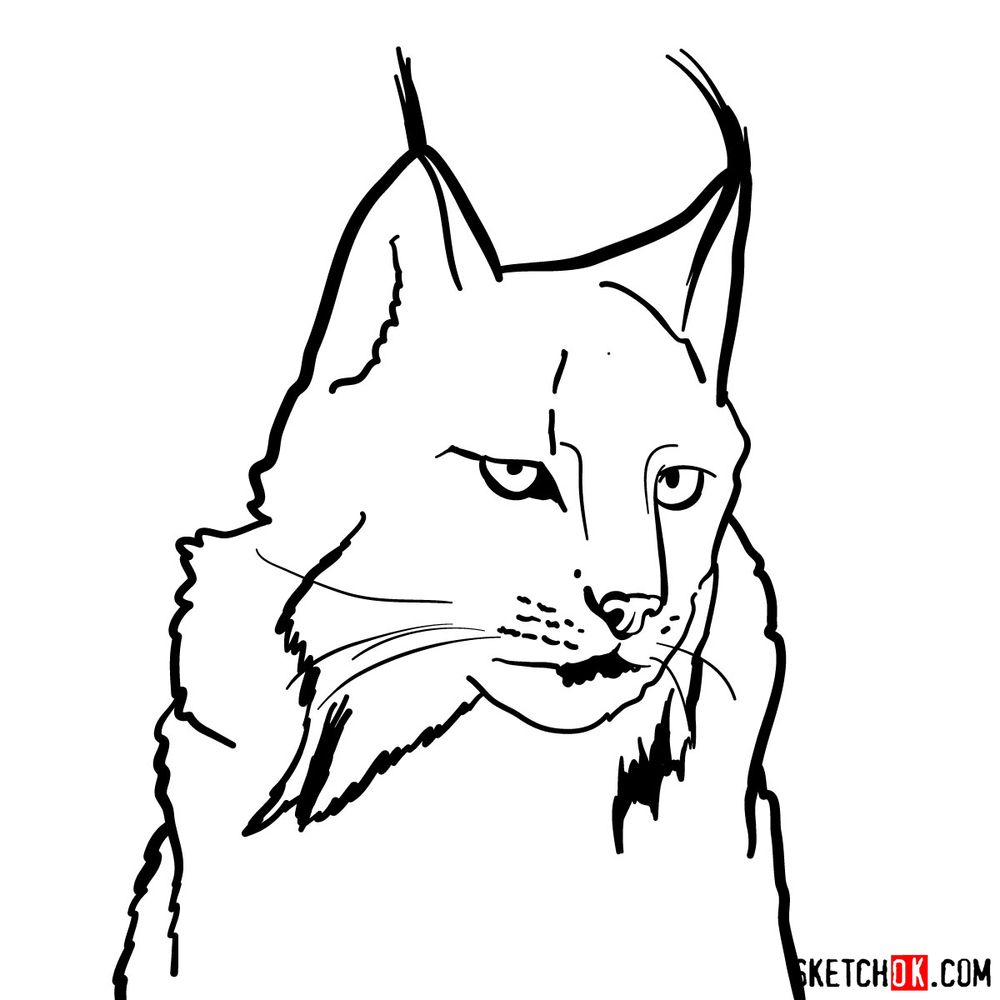 How to draw a lynx head