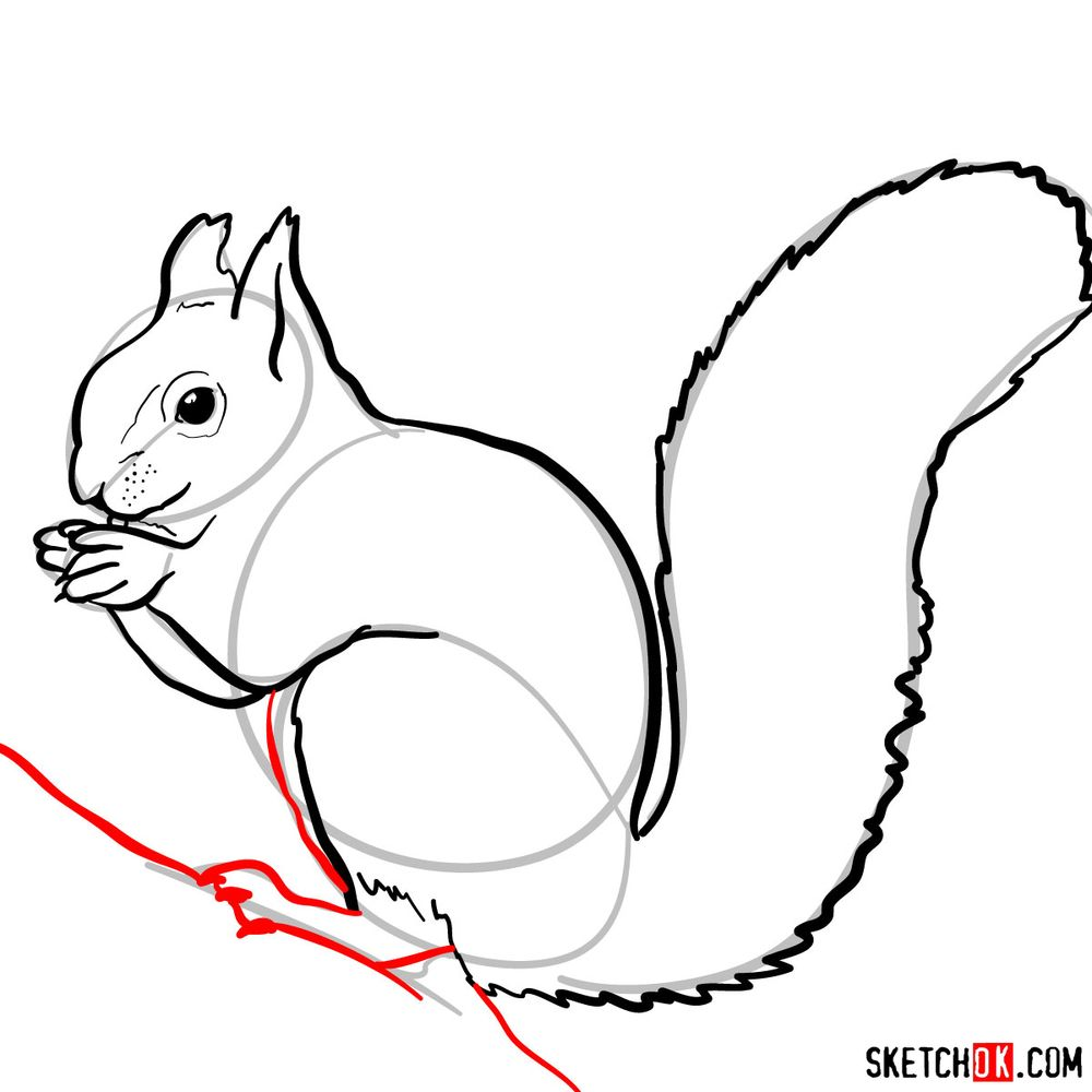 How to draw a squirrel (side view) - step 08