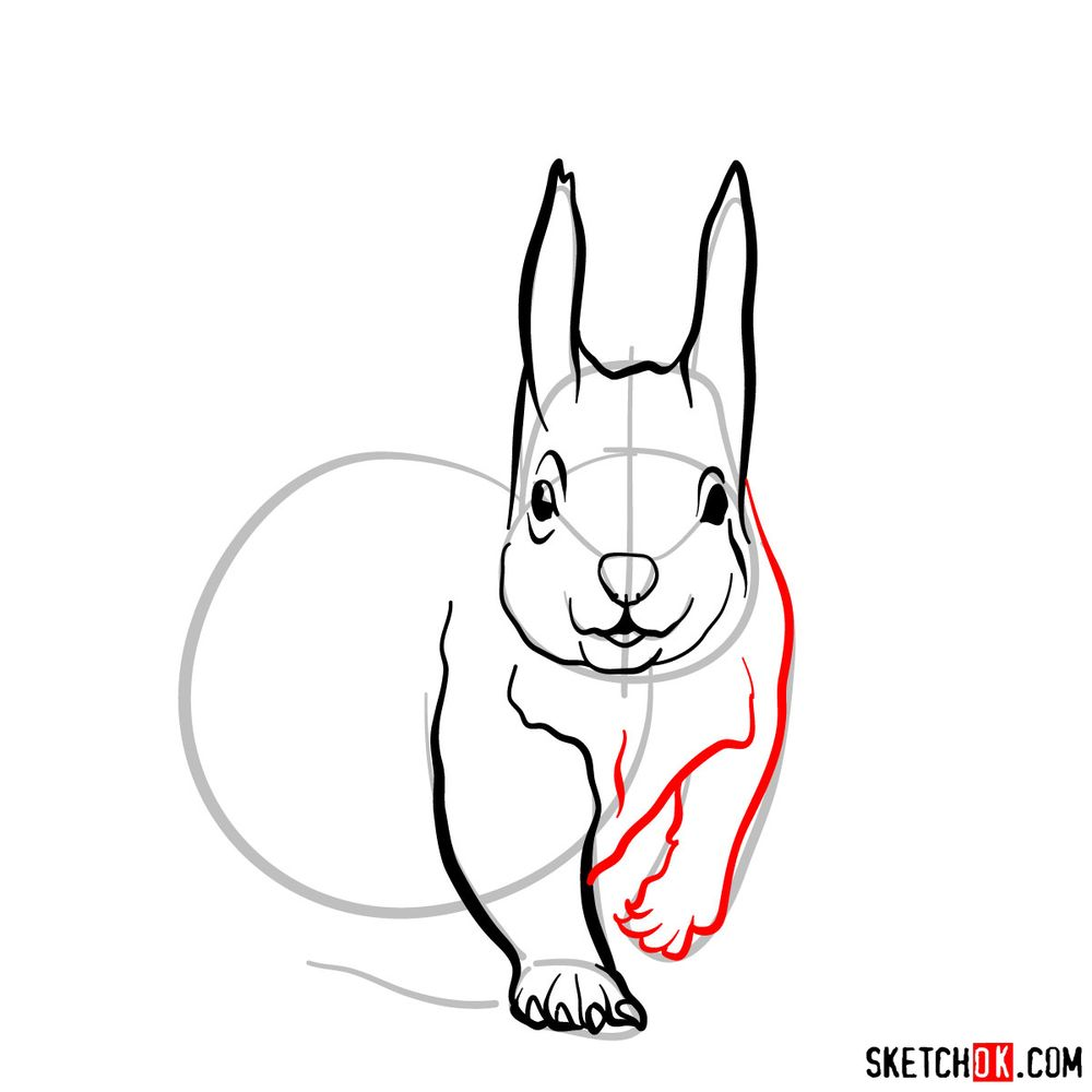 How to draw a squirrel (front view) - step 06
