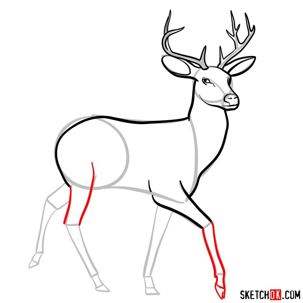 How to draw a deer - step 08
