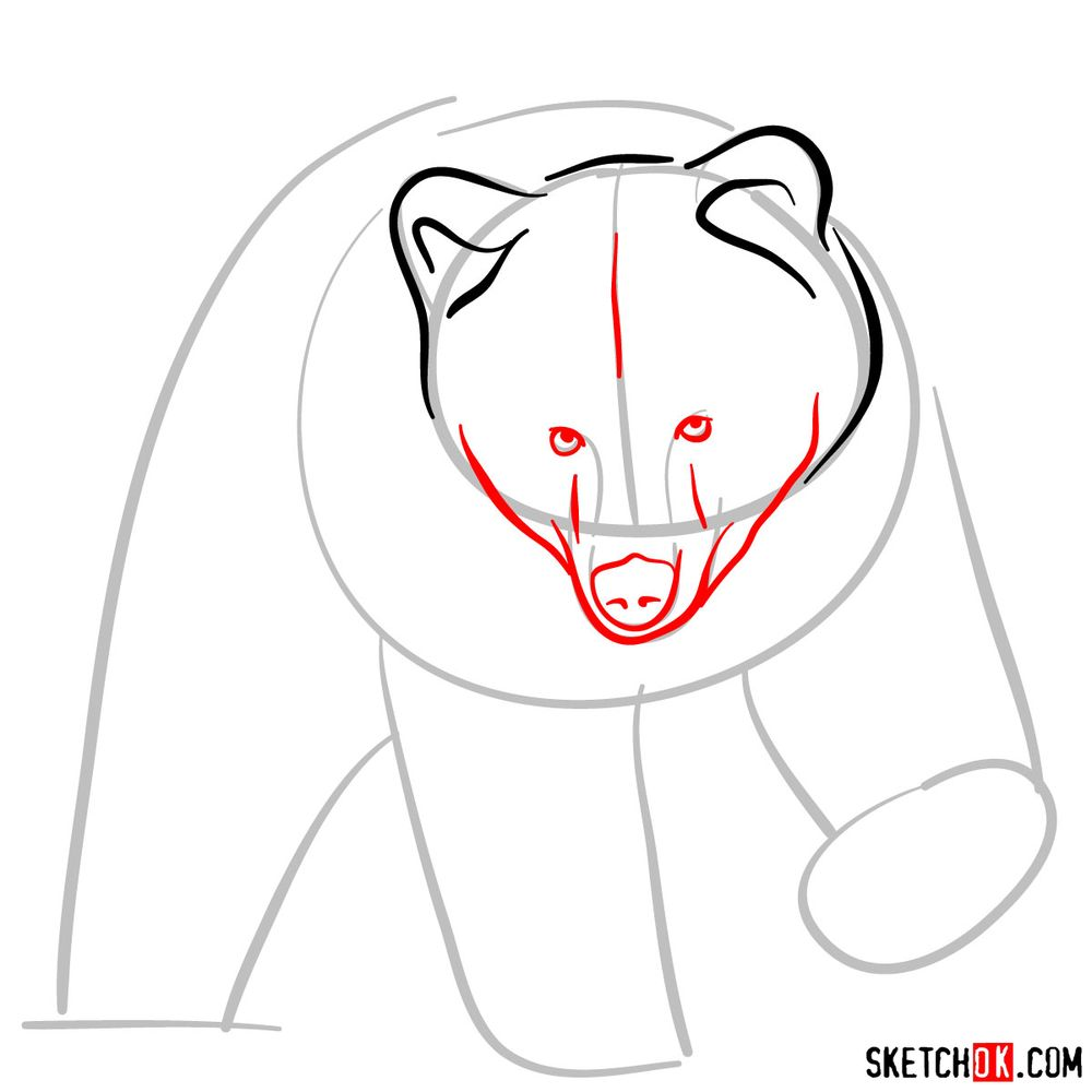 How to draw a grizzly bear (front view) - step 04