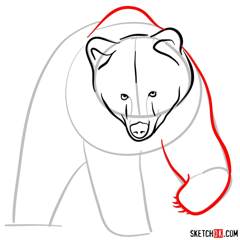 How to draw a grizzly bear (front view) - step 05