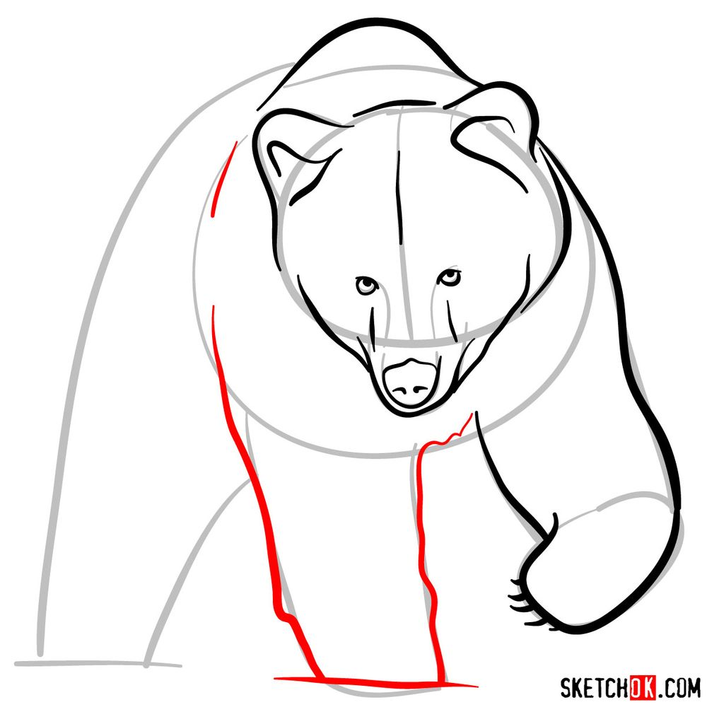 How to draw a grizzly bear (front view) - step 06