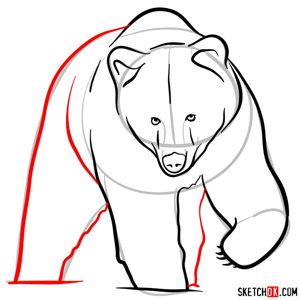How to draw a grizzly bear (front view) - step 07