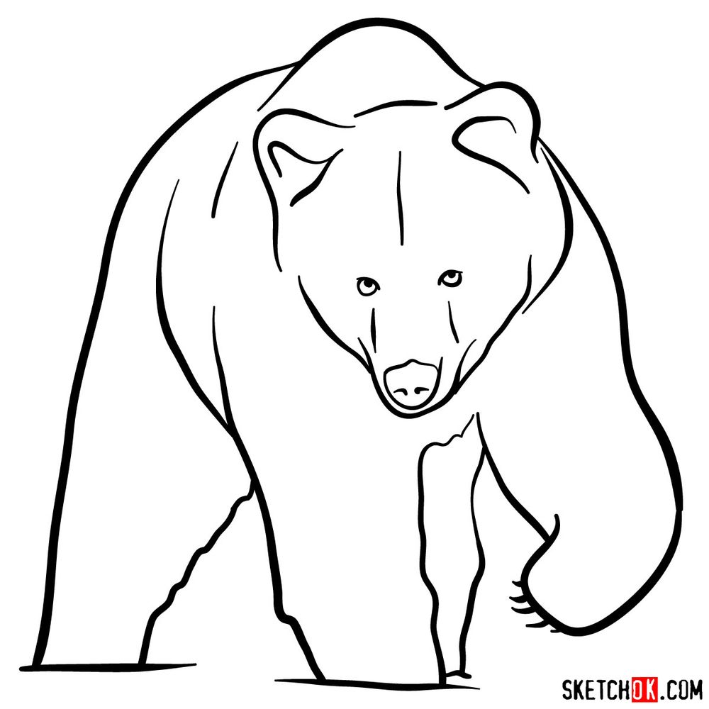 How to draw a grizzly bear (front view)