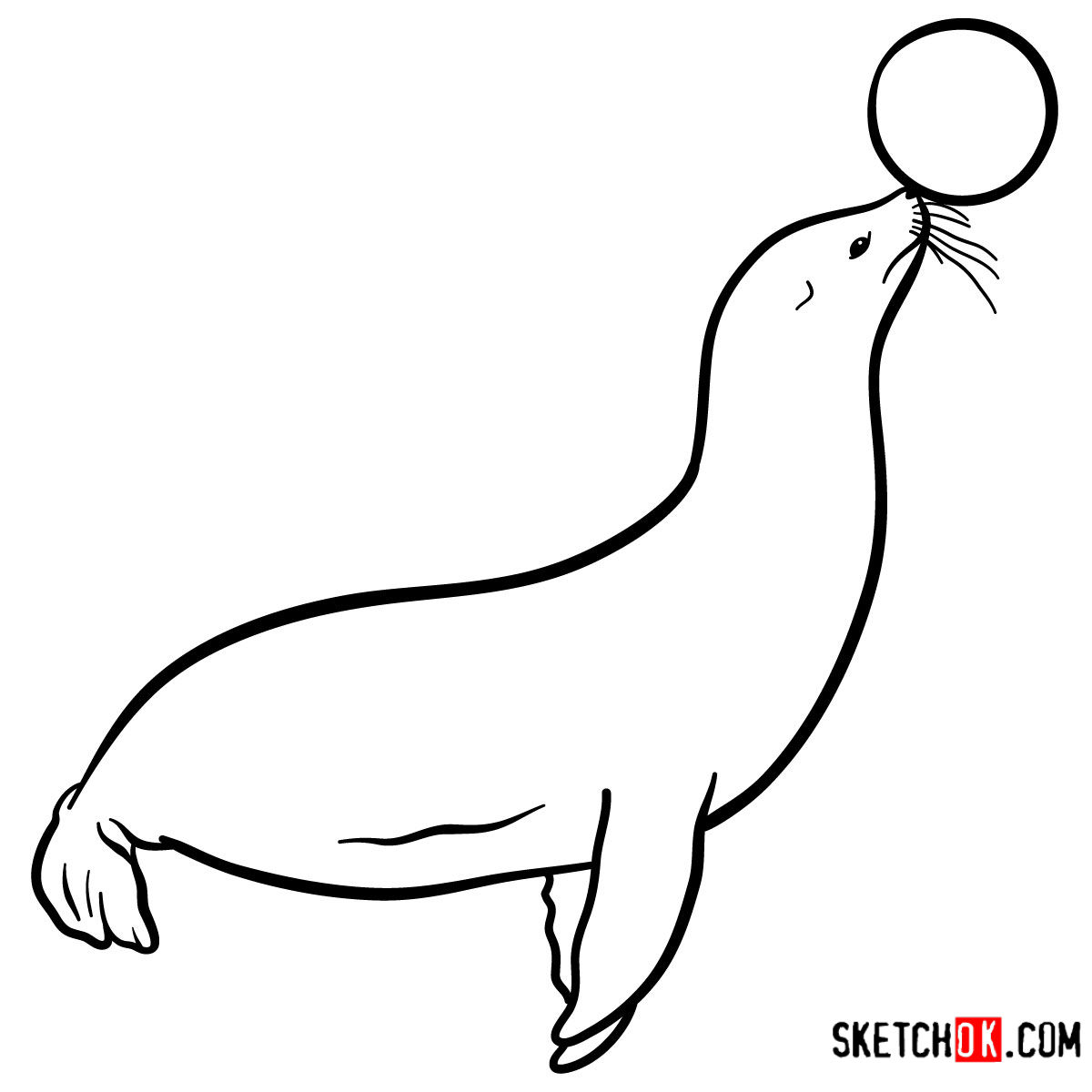 How to draw a Fur seal