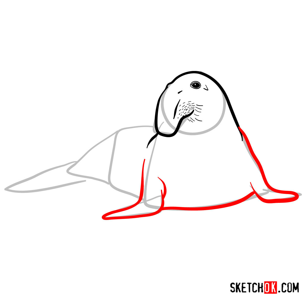How to draw an Elephant seal | Sea Animals - step 06