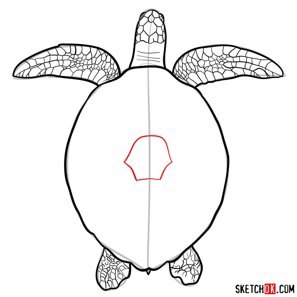 How to draw a Sea Turtle - step 11