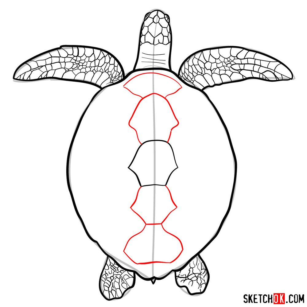 How to draw a Sea Turtle - step 12