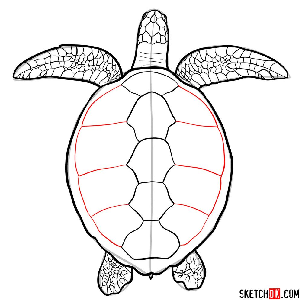 How to draw a Sea Turtle - step 13