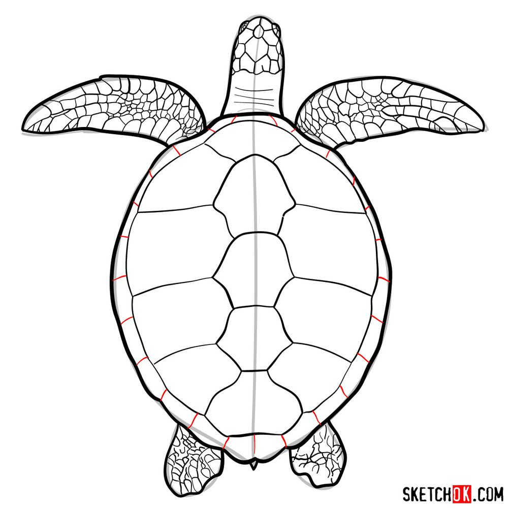 How to draw a Sea Turtle - step 14