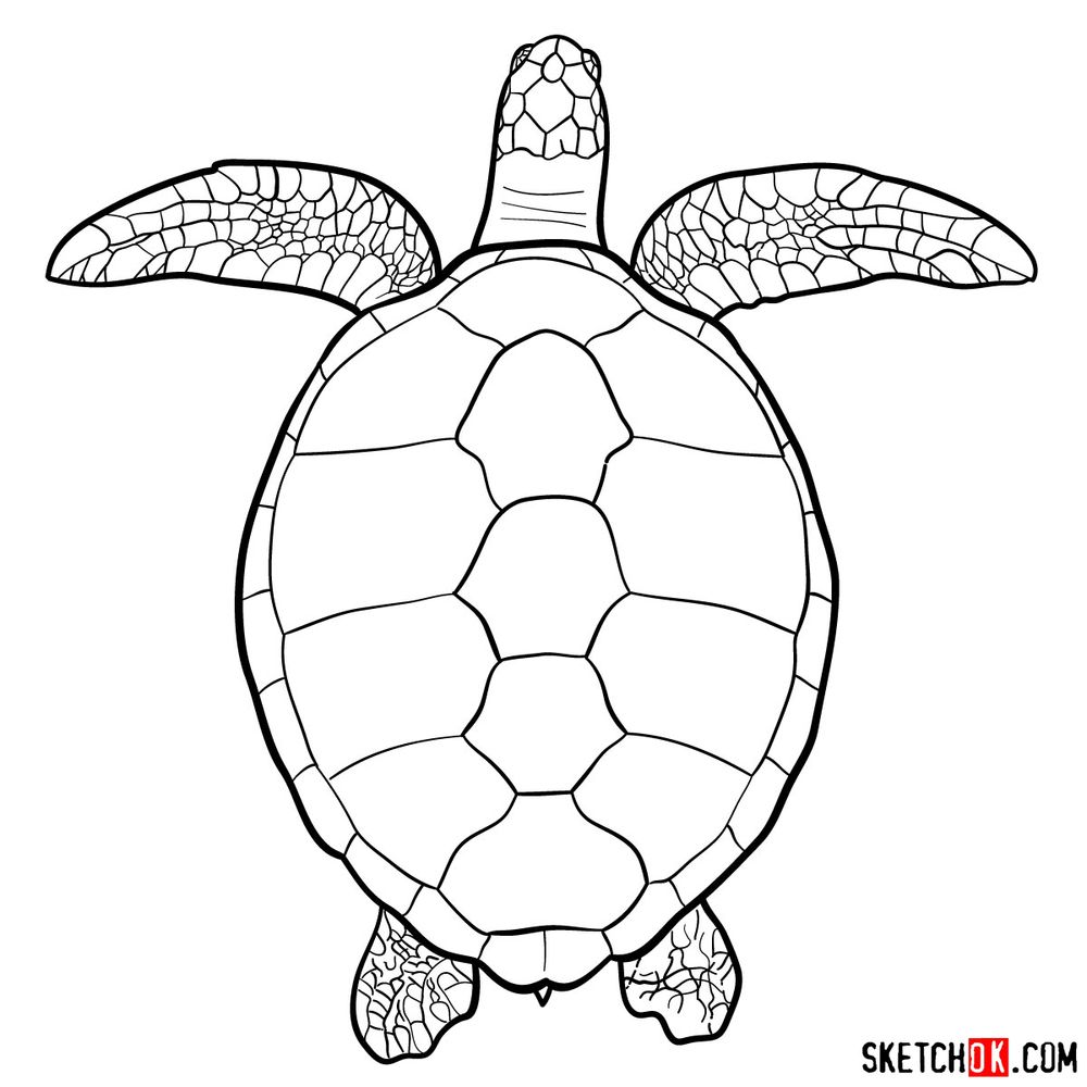 How to draw a Sea Turtle (view from the top)