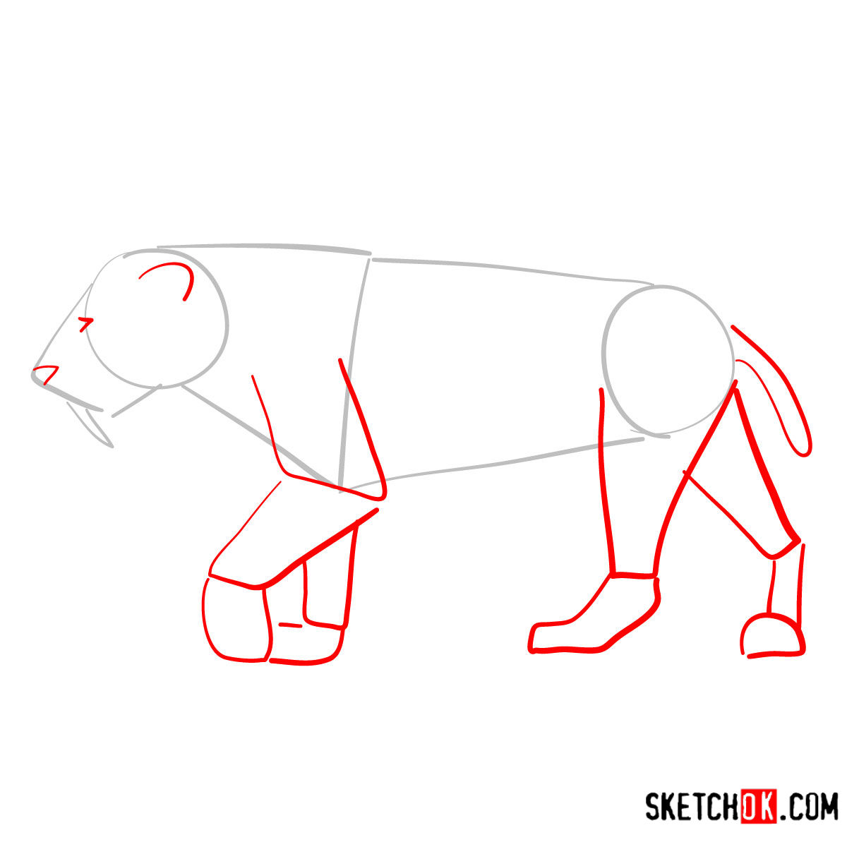 How to draw a Smilodon | Extinct Animals - step 02