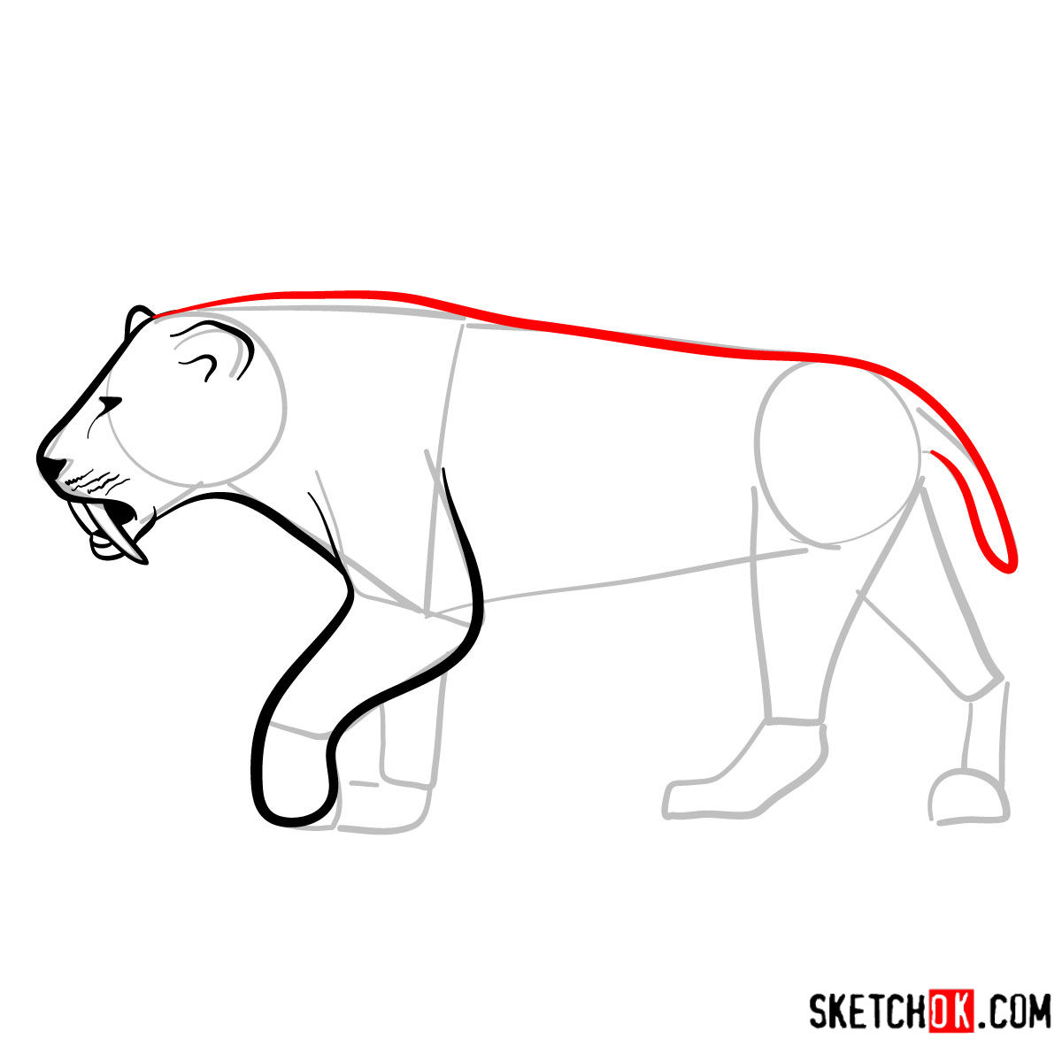 How to draw a Smilodon | Extinct Animals - step 07