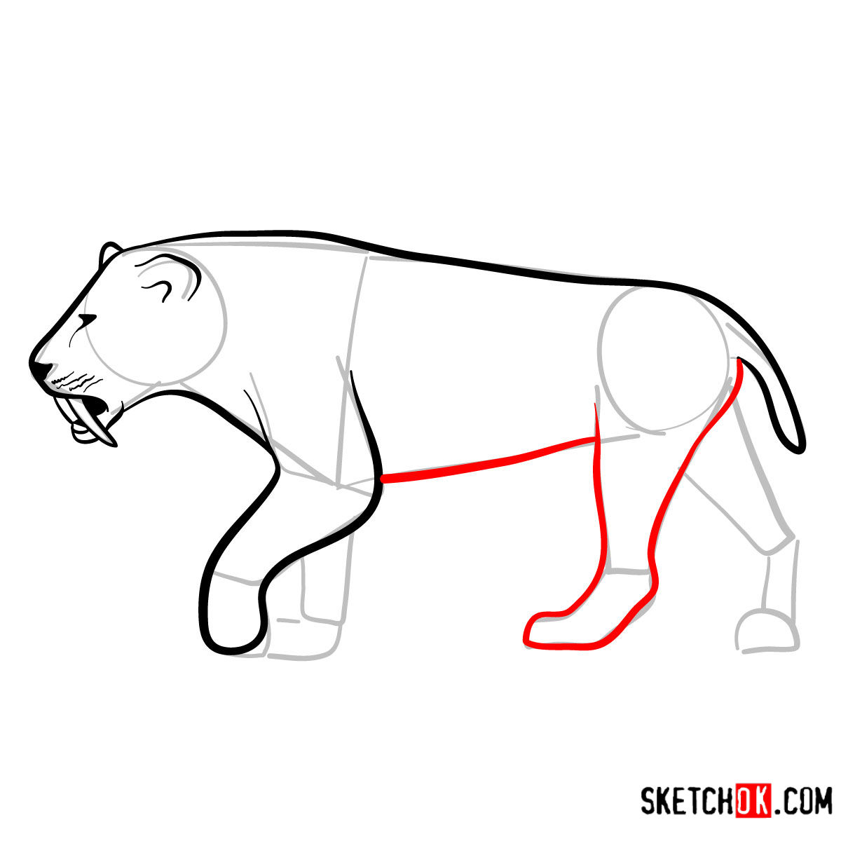 How to draw a Smilodon | Extinct Animals - step 08