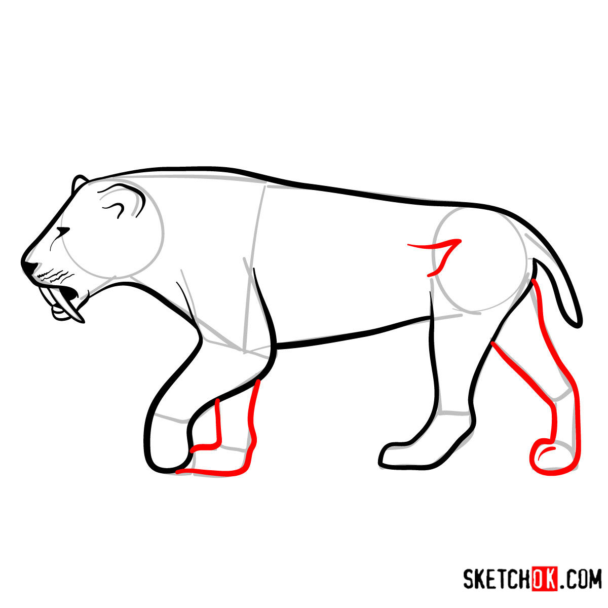 How to draw a Smilodon | Extinct Animals - step 09