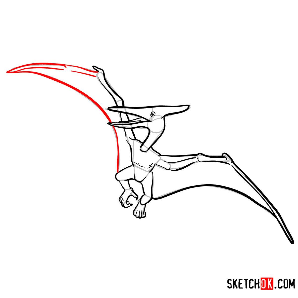 How to draw a Pterodactylus   Extinct Animals - step 11