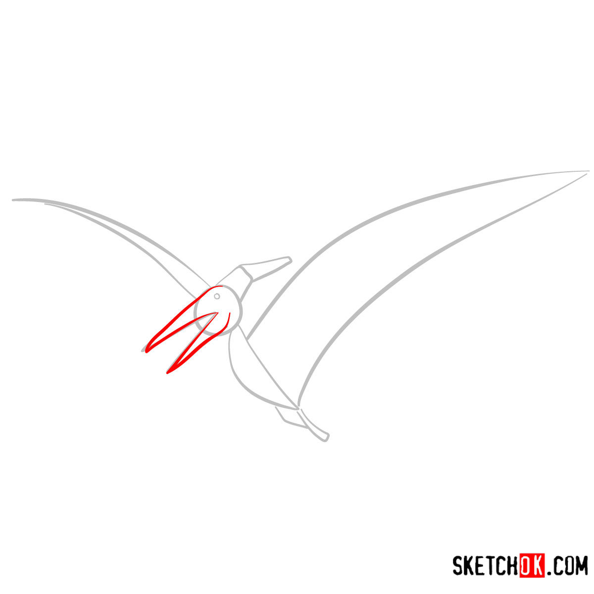 How to draw a Pteranodon | Extinct Animals - step 03