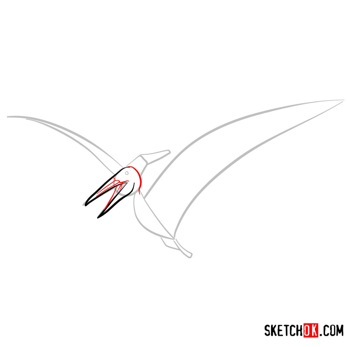How to draw a Pteranodon | Extinct Animals - step 04