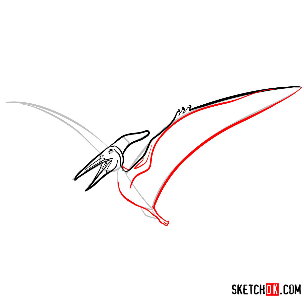 How to draw a Pteranodon | Extinct Animals - step 07